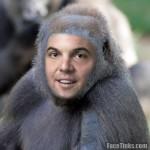 Tim Hudak's face on a gorilla